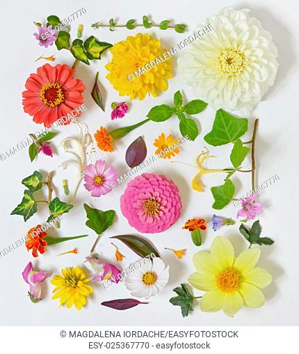Summer flowers pattern on white background