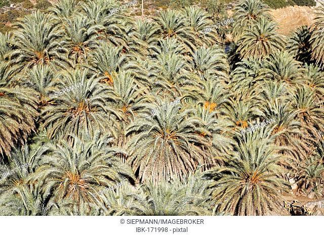 Vai palm beach, endemic palm Phoenix theophrasti, eastern Crete, Greece