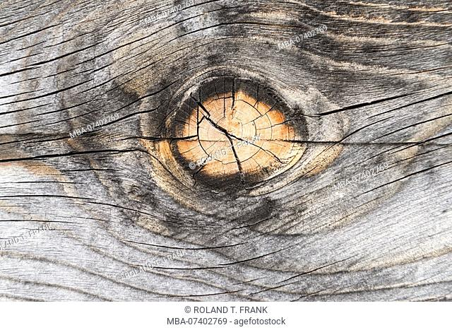 Knothole in an old grayed board