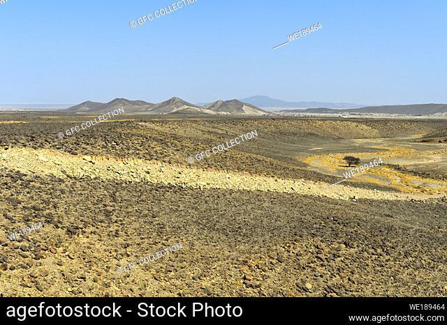 Arid landscape with tree located below sea level in der Danakil depression, Afar region, Ethiopia