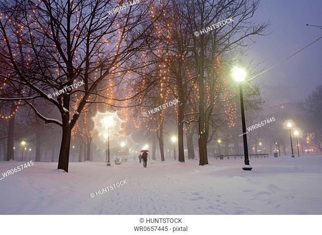 Christmas decoration in a public park in blizzard, Boston Common, Boston, Suffolk County, Massachusetts, USA