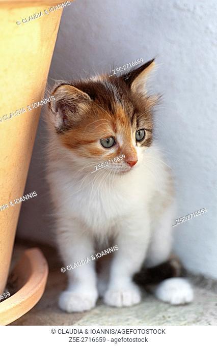 Calico kitten sitting outdoors
