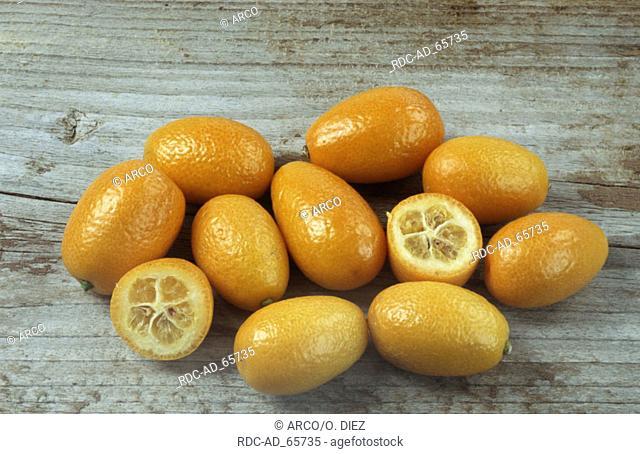 Kumquat Fortunella spec. cut out object
