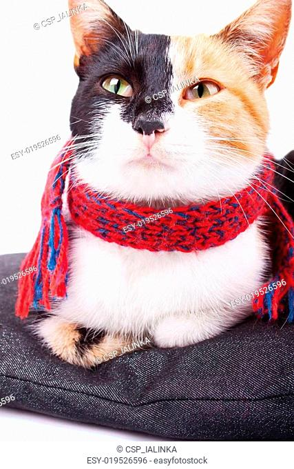 Calico Cat in Red Scarf