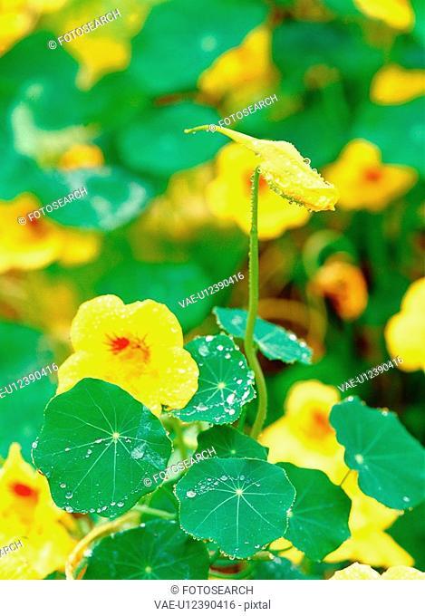 nature, plant, spring, season, flower, film