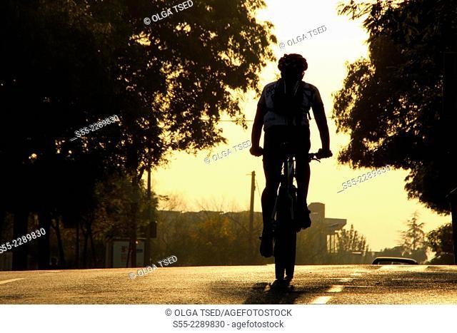 Cyclist in the sunset, Collserola mountain, Esplugues de Llobregat, Barcelona; Catalonia, Spain