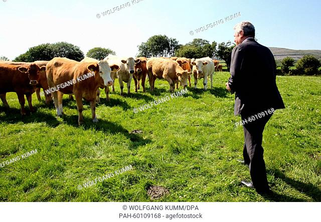 German President Joachim Gauck (R) visits the Droney cattle and sheep farm in Ballyvaugha, Ireland, 15 July 2015. Gauck is on a three-day visit to Ireland