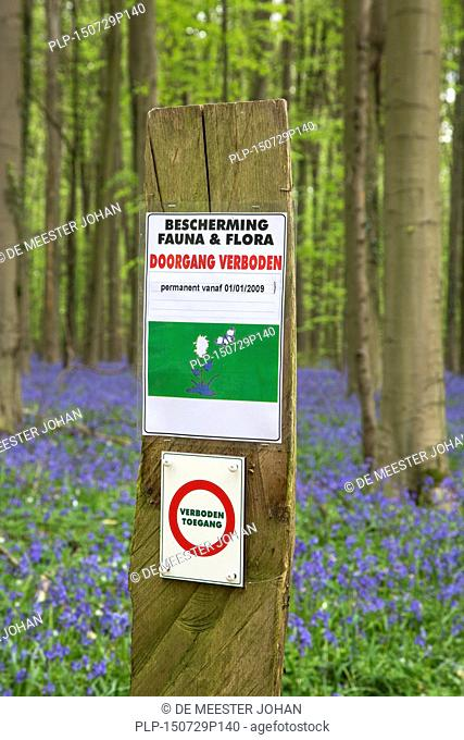 Prohibition sign prohibiting entrance and bluebells (Endymion nonscriptus) in flower in beech forest (Fagus sylvatica) in spring at the Hallerbos near Brussels