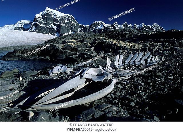 whale's skeleton, Port Lockroy, Goudier Island, Antarctica