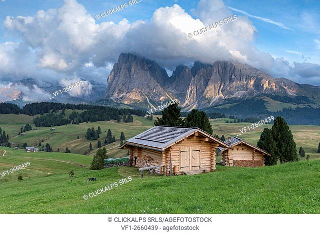 Alpe di Siusi/Seiser Alm, Dolomites, South Tyrol, Italy. View from the Alpe di Siusi to the peaks of Sassolungo/Langkofel and Sassopiatto / Plattkofel