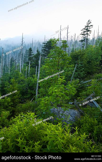 Morning, Clingmans Dome, Sunrise, Great Smoky Mountains National Park
