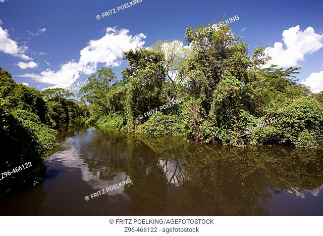 River vegetation. Pantanal, the world largest wetland, Brazil, South America