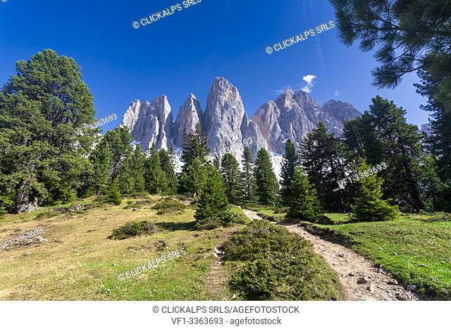 The Odle peaks from Malga Glatsch, Puez Odle, Dolomites, Funes, Bolzano province, South Tyrol, Italy