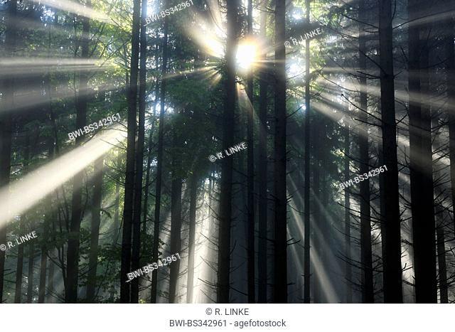 sunbeams in a forest at the Nature Park Buchenberg, Austria, Lower Austria, Mostviertel, Waidhofen an der Ybbs