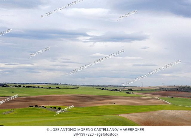 Fields near Saelices, next to Segóbriga ruins, Castilla-La Mancha, Spain, Europe
