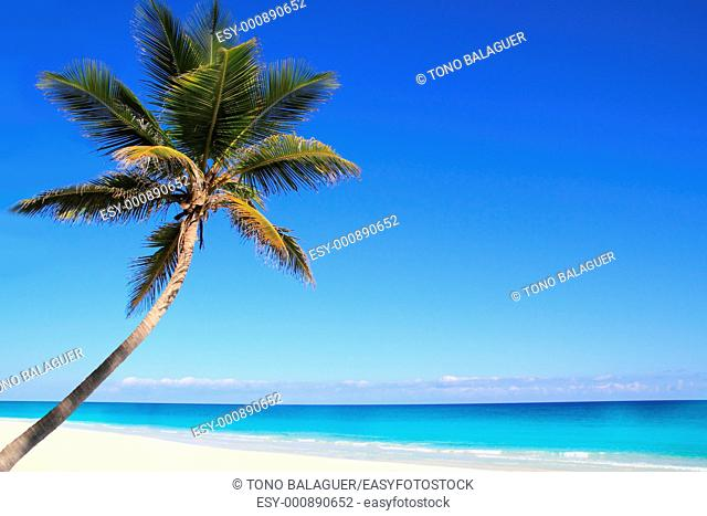 Caribbean coconut palm trees in tuquoise sea water