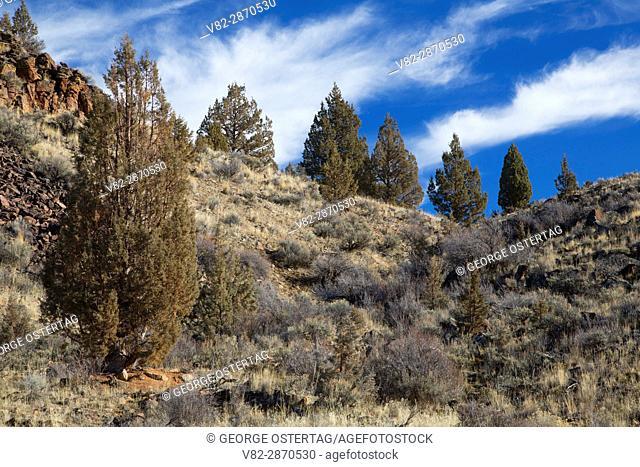 Sage - Western juniper (Juniperus occidentalis) forest, South Fork Wilderness Study Area, Prineville District Bureau of Land Management, Oregon