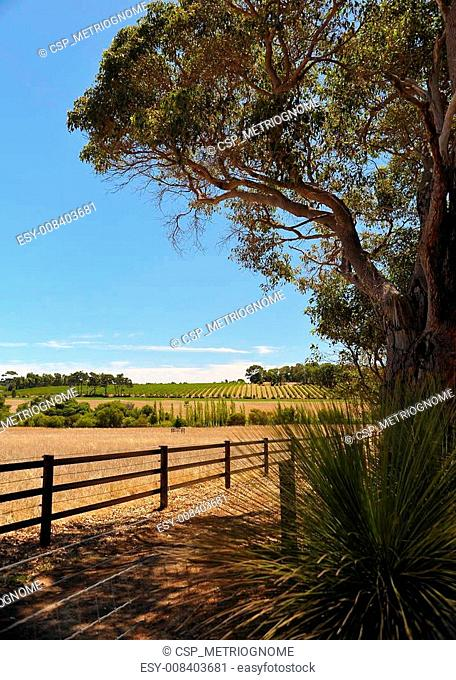 vineyard in the frame
