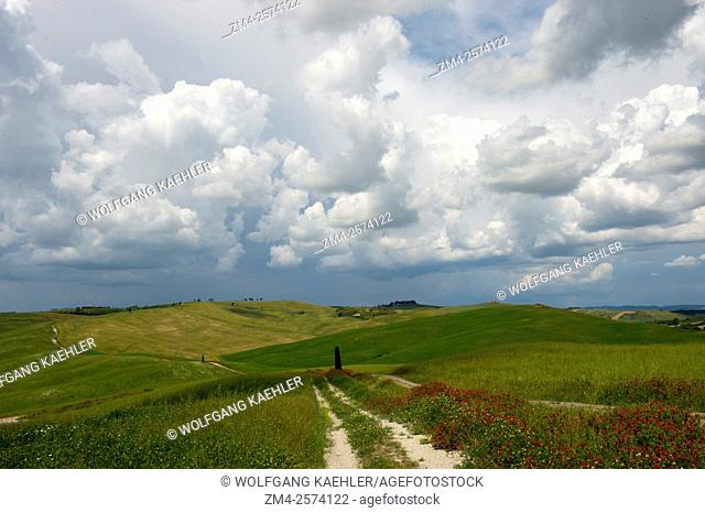 Storm clouds over a field with red flowers and a road near San Quirico in the Val d'Orcia near Pienza in Tuscany, Italy
