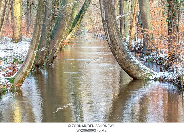 Tree trunks along forest stream with snow in winter