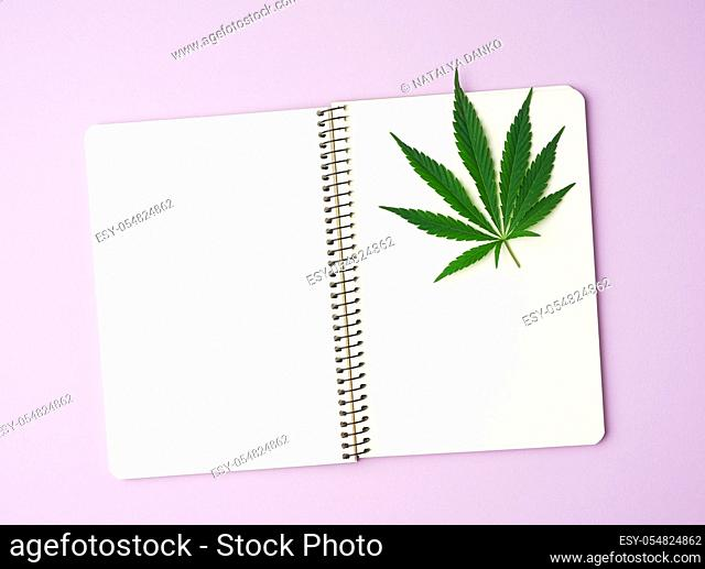 open notebook with blank white pages and green leaves of hemp on a purple background, top view