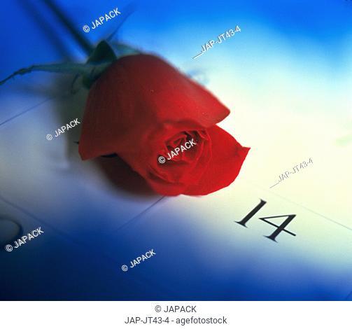 Rose on calender