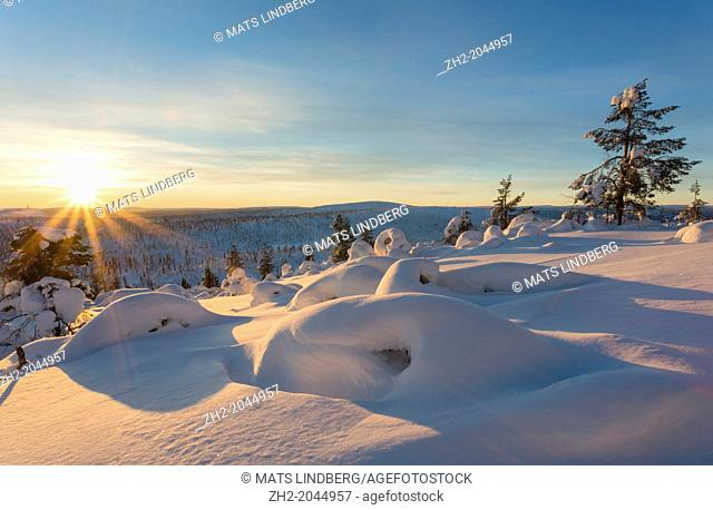 Winter landscape in direct light at sunset with snowy trees on mount Hirvas in february in Gällivare swedish lapland, Sweden