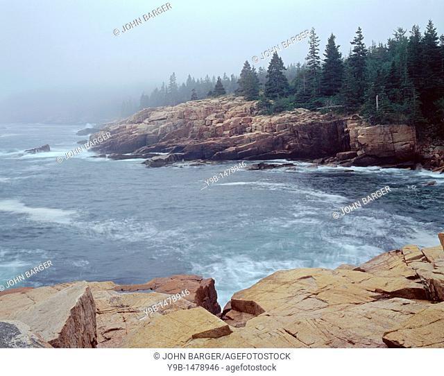 Fog shrouds rocky, granite coastline, near Thunder Hole, Acadia National Park, Maine, USA