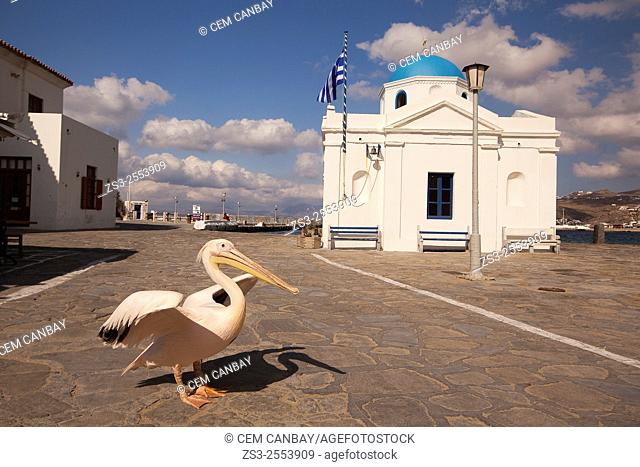 Pelican Petros, the town mascot in front of the blue domed church, Mykonos, Cyclades Islands, Greek Islands, Greece, Europe