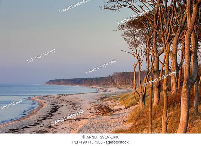 Darß / Darss west coast, peninsula of Fischland-Darß-Zingst, Western Pomerania Lagoon Area NP, Mecklenburg-Western Pomerania, Germany