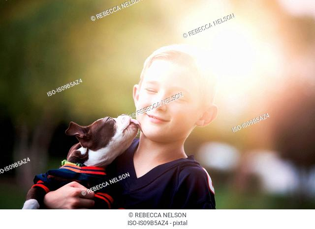 Boston Terrier puppy licking boy's face