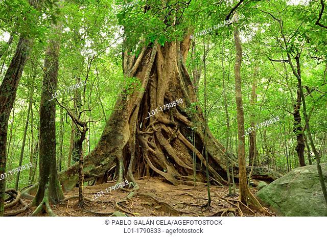 Ritigala Strict Nature Reserve Sri Lanka