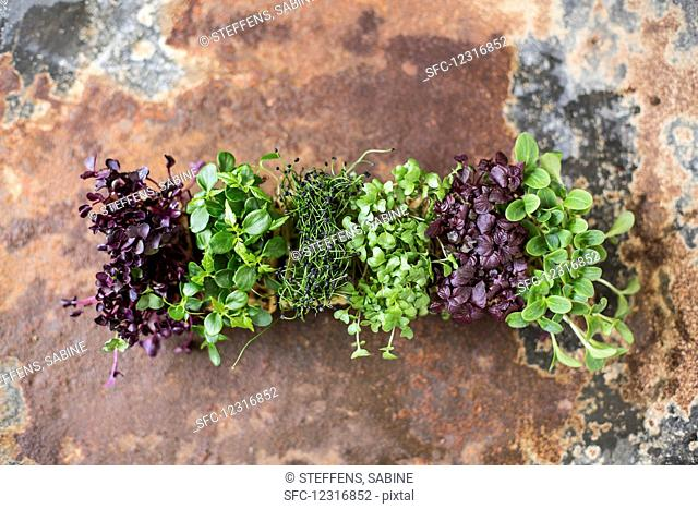 Various types of cress (seen from above)