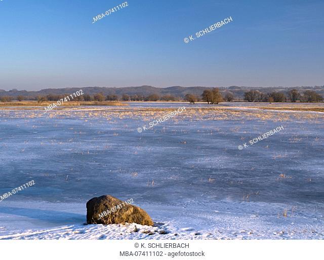 Germany, Brandenburg, Uckermark, Schwedt, Lower Oder Valley National Park, winter day in the Oder meadow, ice rink, willow trees, reed