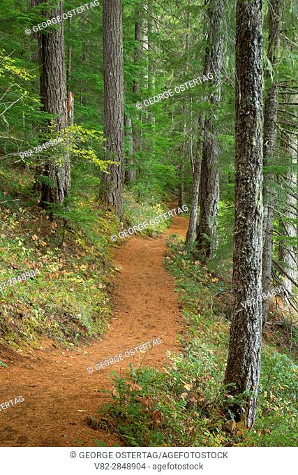 Clear Lake Trail, Willamette National Forest, Oregon