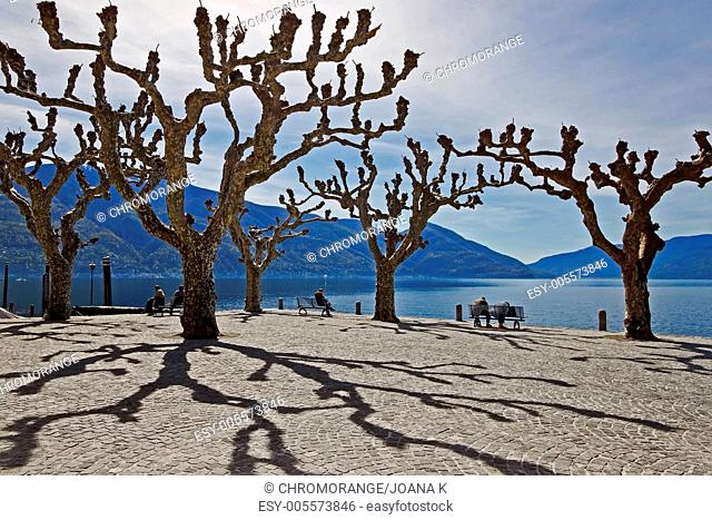 sycamore trees in Ascona Ticino