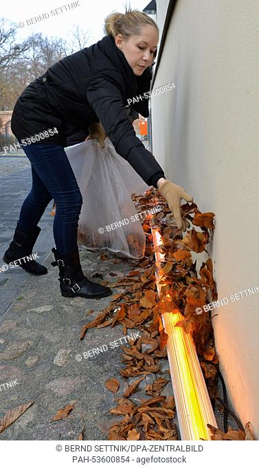 Russian student Maria Bulygina spreads leaves over a strip light in Neuruppin, Germany, 14 November 2014. 21 students from the degree program Architectural...