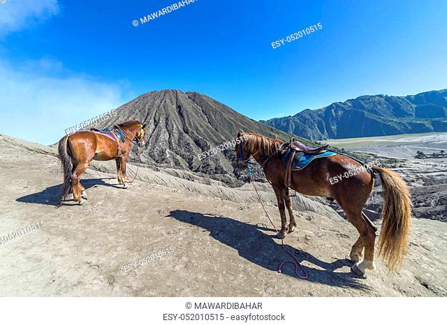 The horse at Mount Bromo volcano, the magnificent view of Mt. Bromo located in Bromo Tengger Semeru National Park, East Java, Indonesia