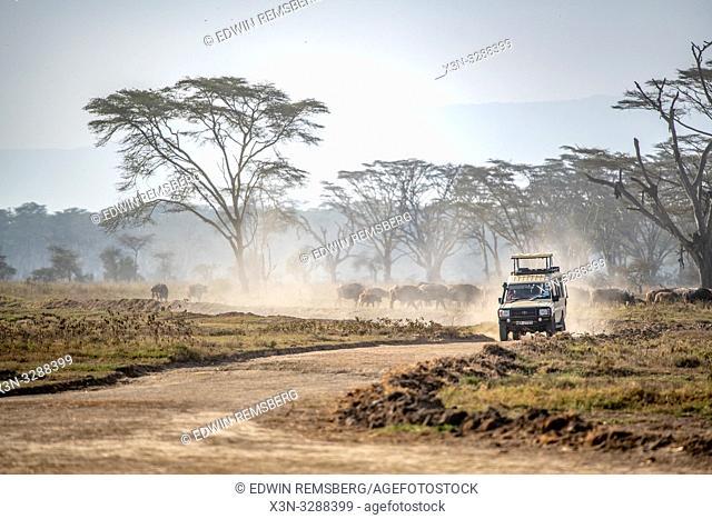 A Toyota Type 79 Land Cruiser Game Viewer driving along a dirt road through Lake Nakuru National Park, Kenya