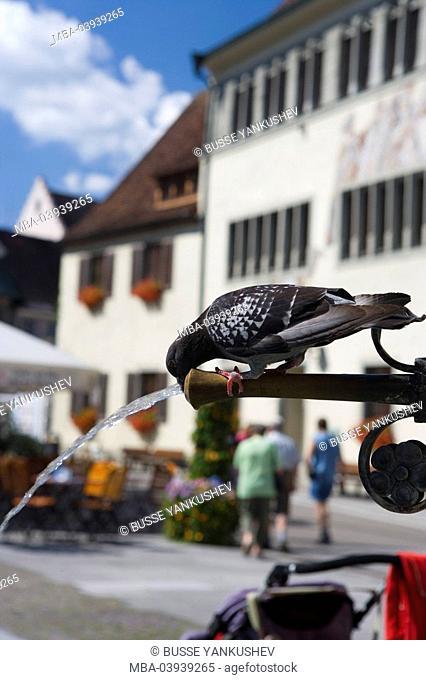 Germany, Baden-Württemberg, Lake Constance-district, Lake Constance, Überlingen, grange, wells, pigeon, drinks