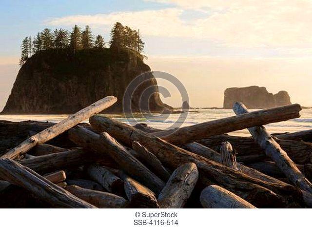 Driftwood on the beach, Second Beach, Olympic National Park, Washington State, USA