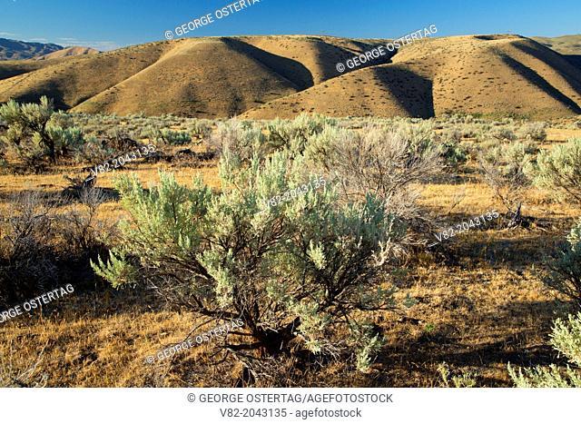 High desert sage, Main Oregon Trail National Backcountry Byway, Oregon Trail National Historic Trail, Idaho