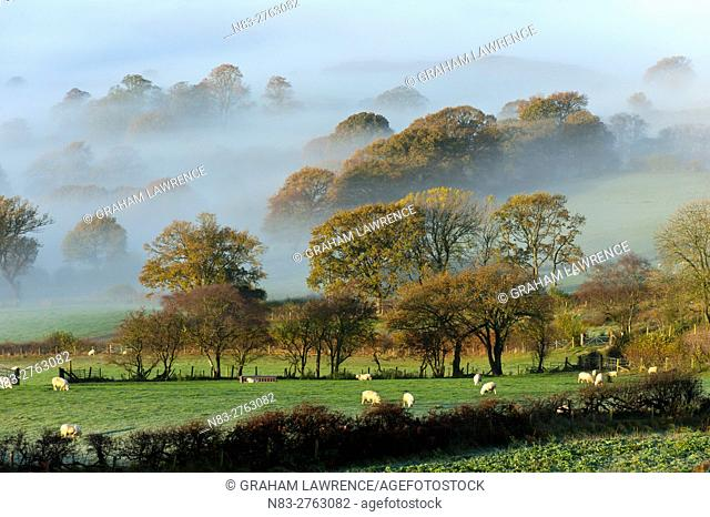Misty valley landscape at sunrise near Llandrindod Wells, Powys, Wales, UK