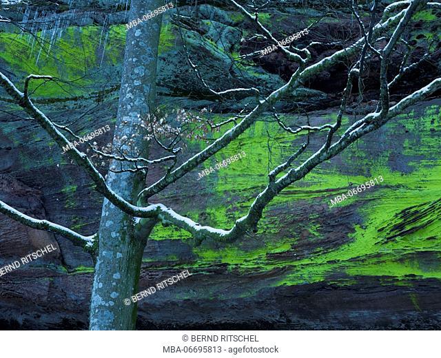Altschlossfelsen, Palatinate Forest, Rhineland-Palatinate, Germany