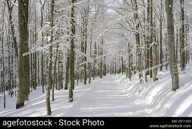 Snowy hiking path. Winter at Mount Lusen in National Park Bavarian Forest (Bayerischer Wald), Europe, Central Europe, Germany, Bavaria