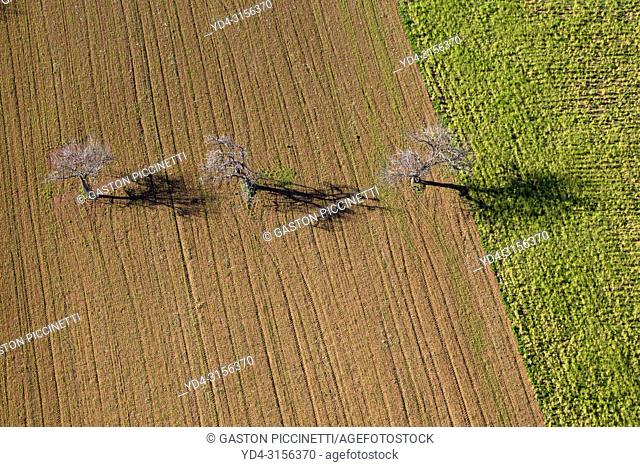 Aerial view of trees in the field, Mallorca lands, Balearic Island, Spain