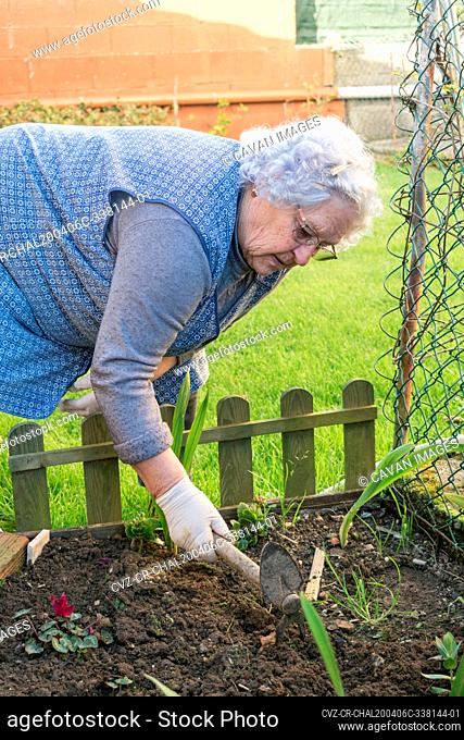 Old woman works the soil in the home garden with a small hoe