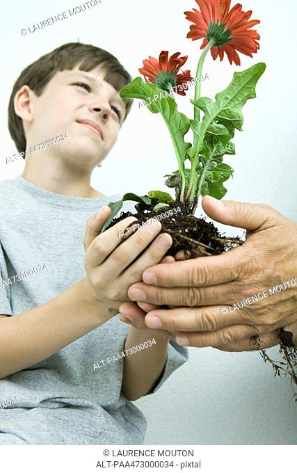Boy holding flowers in cupped hands, low angle view