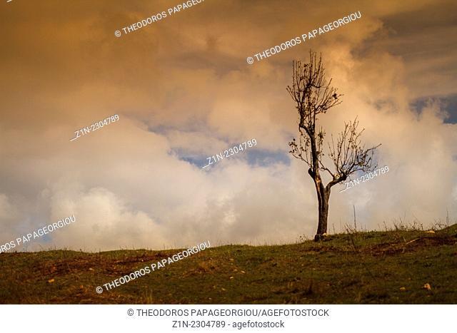 Lonely tree near Foloi forest. Eleia, Peloponnese, Greece