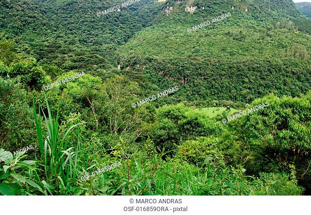 natural native forest
